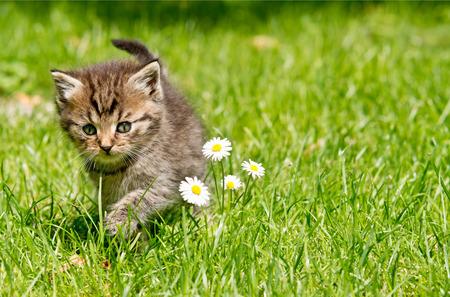 animal pussy: kitten Stock Photo