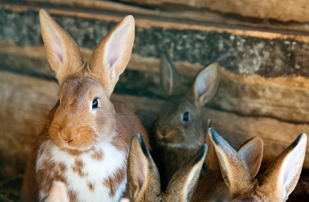 hutch: rabbits in the wooden hutch Stock Photo