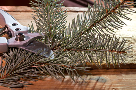 pruning shears: new pruning shears on the wooden table