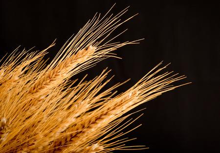 deatil: deatil of barley on the black background Stock Photo