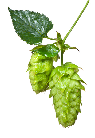 hop cone: two hops cones isolated