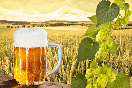 hop cones: a glass of beer with hop cones Stock Photo