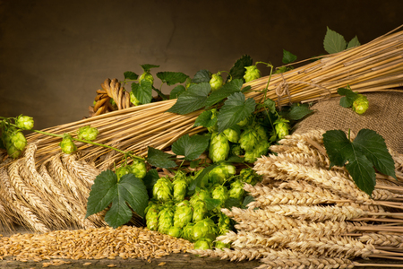 hop cone: raw material for beer production in the basket