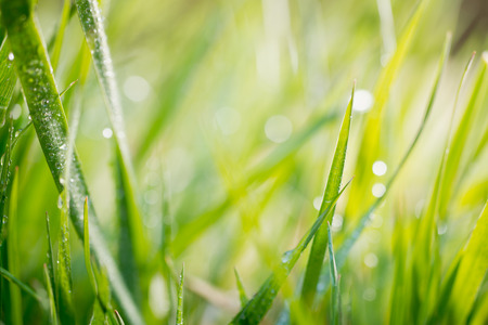 field depth: grass with drops of water, shallow depth of field Stock Photo