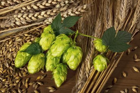 cebada: conos de lúpulo y cebada materia prima para la producción de cerveza Foto de archivo