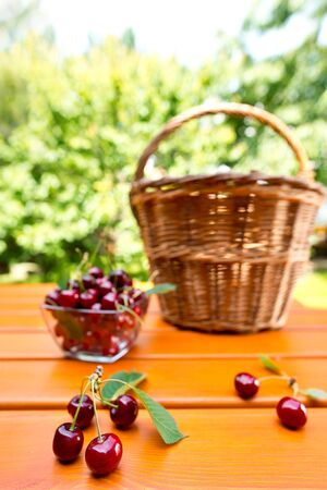 hand basket: red cherry and hand basket in the garden, shallow depth of field