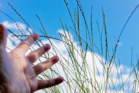 reach out: detail of hand reach out for grass,shallow depth of field