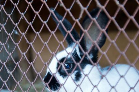 behind bars: detail of bunny rabbit behind  bars