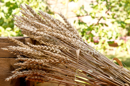 sheaf: sheaf of wheat on the old wooden desk
