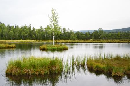 bog: A peat bog in Sumava, Czech Republic