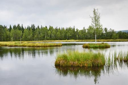 turba: A peat bog in Sumava, Czech Republic