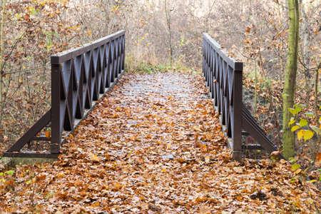 wooden bridge: wooden bridge in the forest in the autumn