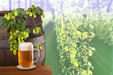 hopfield: pint with hop in the hop field