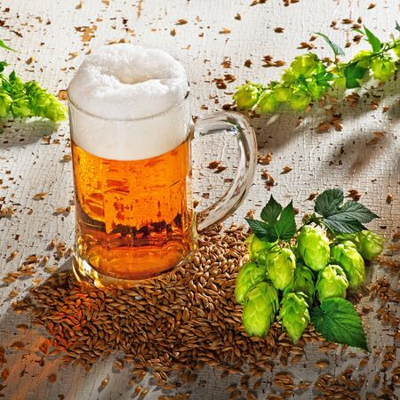 hop cone: beer glass and raw material for beer production Stock Photo