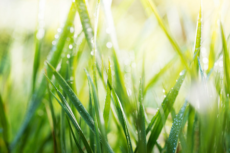 grass field: grass with drops of water, shallow depth of field Stock Photo