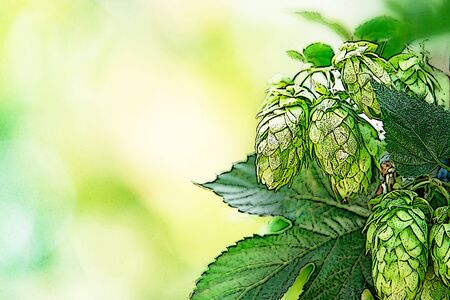 hop cones: illustration of hop cones in the hop fild, place for text