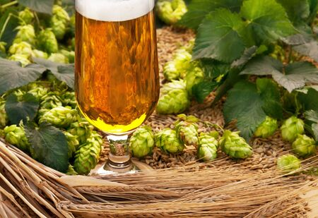 hop cone: glass beer with barley and hop cones