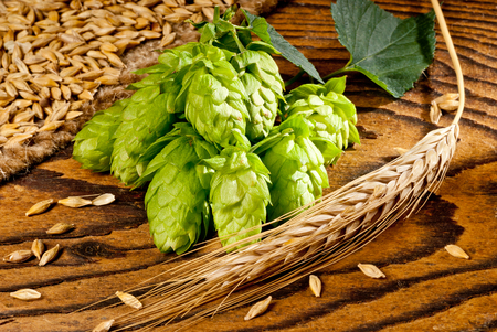 hop cone: detail of hop cones and barley on the wooden desk
