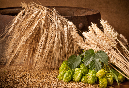 hop cone: hops, barley and wheat on the old barrel Stock Photo