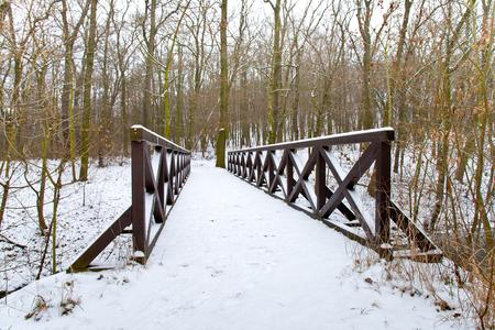 pedestrian bridge: pedestrian bridge in the forest in the winter