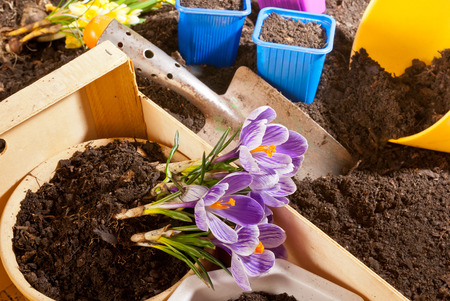 Planting of flowers in the springtime