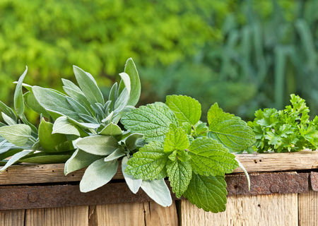 bee balm: sage and the lemon balm on the old wooden crate Stock Photo