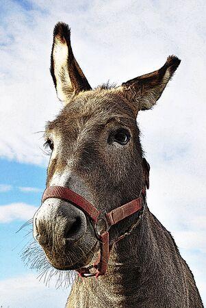 burro: ilustración de burro con collar de cabeza roja Foto de archivo