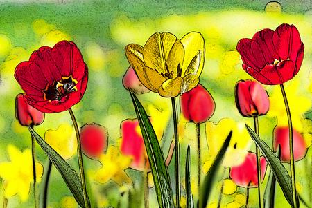 dessin fleur: illustration de lit de tulipes rouges et jaunes