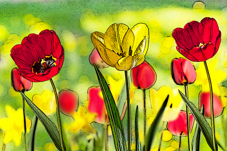 flower beds: illustration of bed of red and yellow tulips