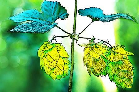 hopfield: Illustration of hop cones in the hop field