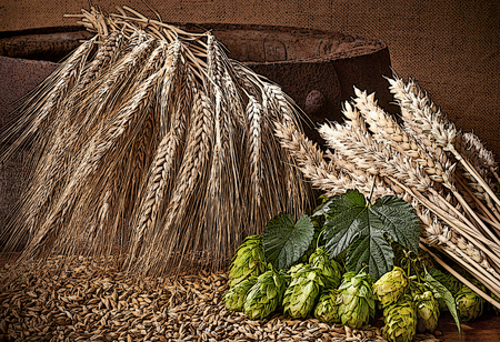 hop cone: illustration of hops, barley and wheat on the old barrel