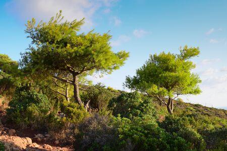 zakynthos: Coastal landscape with trees in Zakynthos, Greece