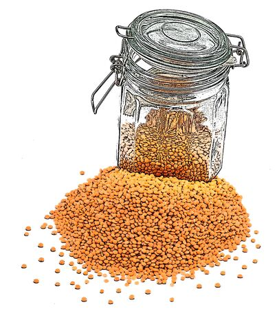 pulses: illustration of lentils with preserve on the white background