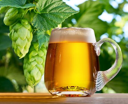 hopgarden: hop cones with glass of beer in the hop field