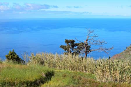 scrub grass: Coastal landscape in Madeira island, Portugal