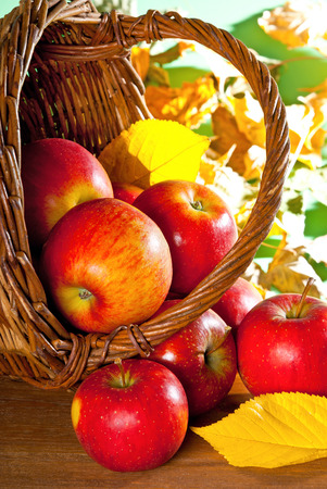 wicker basket: red apples in the wicker basket at autumn