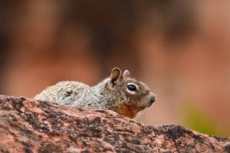 wilds: Ground squirrel in the wilds, Colorado, USA