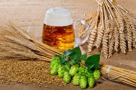 hop cone: glass of beer and raw material for beer production Stock Photo
