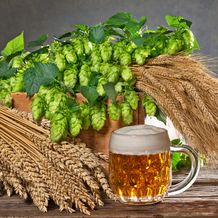 still life with hop cones and raw material for beer production Stock Photo