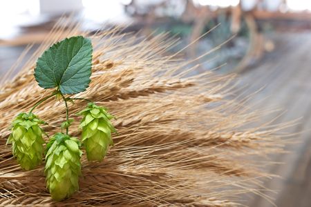 hop cones and Sheaf of barley in the old barn Stock Photo