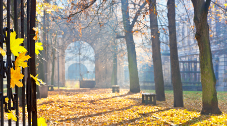 colonade: autumn colonade with a gateway and yellow blades
