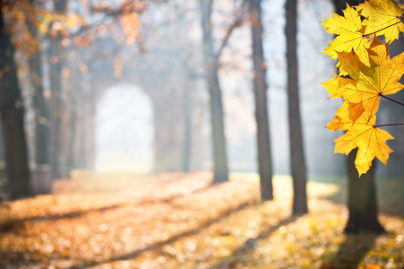 colonade: autumn colonade with a gateway and yellow blades,shallow depth of field