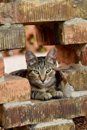 moggy: Tabby cat sitting on the bricks Stock Photo