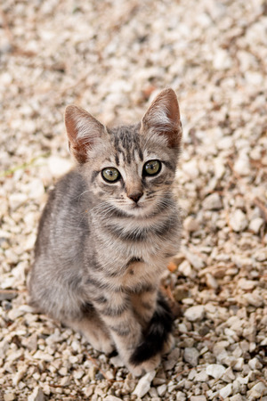 moggy: Portrait of stray kitten on the unfocused background