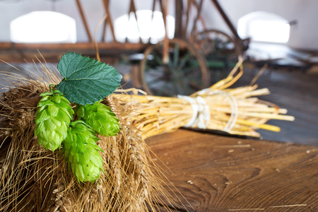old wood farm wagon: hop cones and Sheaf of barley in th old barn