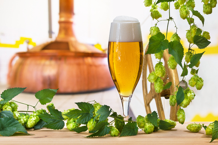 Glass of beer with hops in the brewery