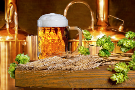 brassy: Beer glass with hops and barley in the brewery Stock Photo