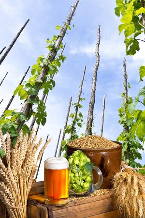 hopgarden: traditional hop garden with beer and malt
