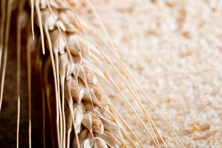 Detail Of Wheat On The Slice Of Bread