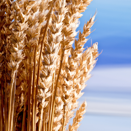 beardless: Sheaf Of What On The Blue Sky Stock Photo